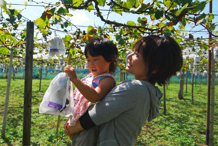 grape hunting (picking) junko and noa