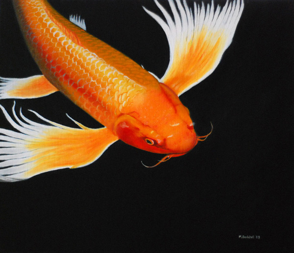 orange koi carp On orange coy fish