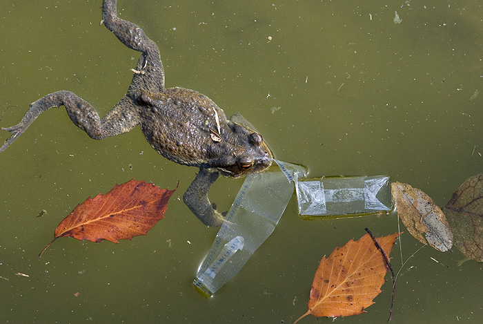 frog in dirty water